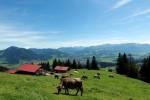 """""""Schwiegertochter gesucht"""": Hula-Hoop, Gartenparty und Piknik - TV News"""