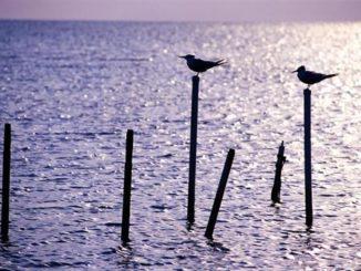 terns-perch-sunrise-the-florida-keys-big-pine-key-florida