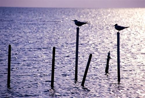 terns-perch-sunrise-the-florida-keys-big-pine-key-florida