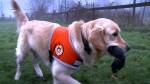 Nur jeder tausendste Hund hat die Gabe zum Epilepsie-Warnhund