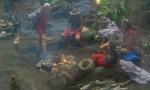 Dschungelcamp 2012
