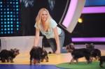 Martin Rütter - Die große Hundeshow mit Sonya Kraus, Dunja Hayali, Atze Schröder und Joachim Llambi - TV News
