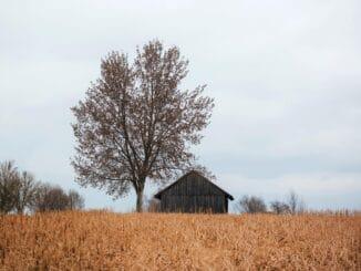 Raus aus der Stadt - Der Traum vom Leben auf dem Land